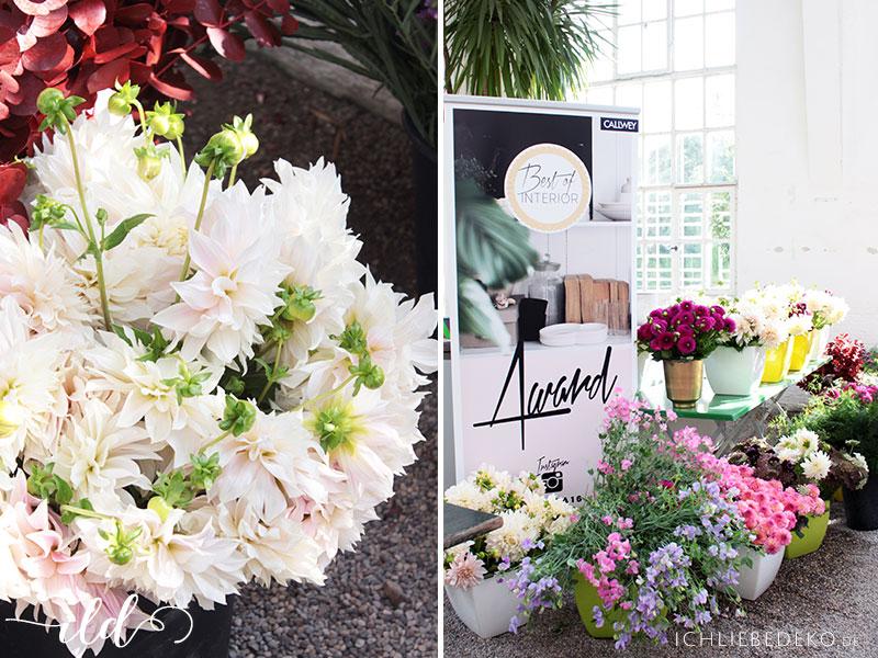 fresh-flowers-beim-boiba