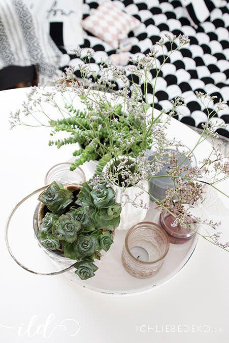 Urban-Gardening im Wohnzimmer