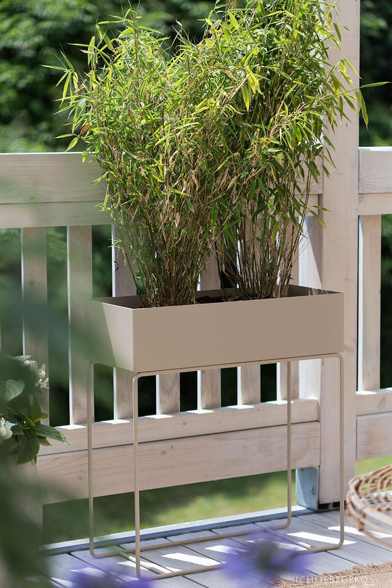 bambus-in-plantbox-als-sichtschutz