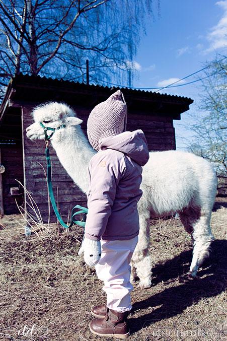 besuch-mit-kindern-auf-alpakafarm