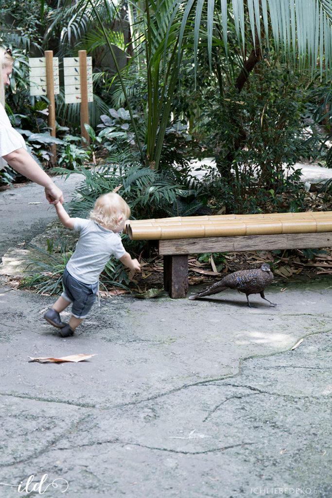 besuch-vogelhaus-zoo-berlin-mit-kindern