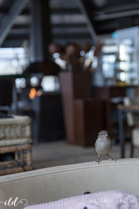 kleiner-efiederter-freund-im-cafe