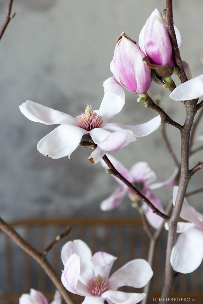 makro-magnolie