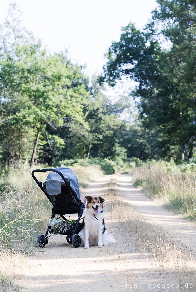 spaziergang-mit-hund-und-kind-im-baby-jogger-city-tour-lux