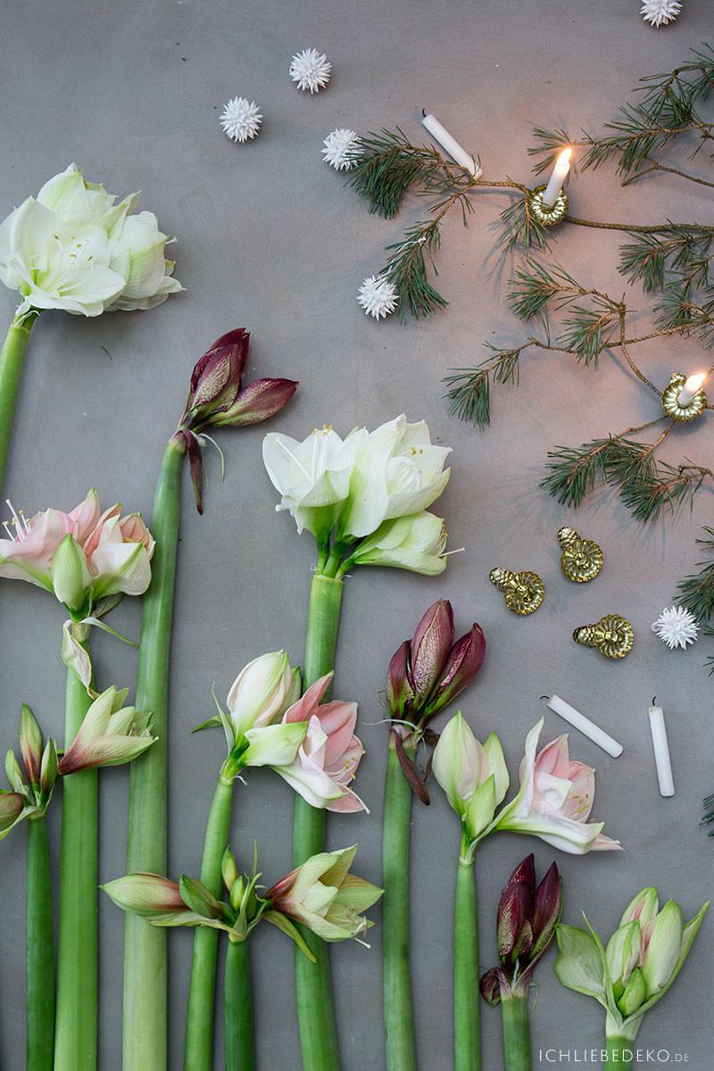 weihnachtsdekoration-mit-amaryllis