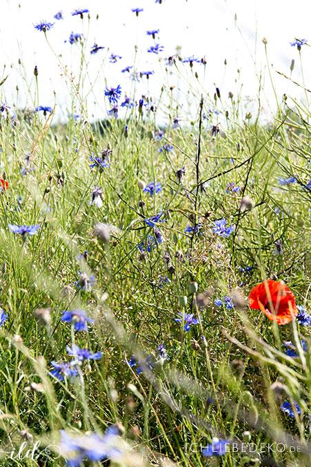 wildblumenwiese-im-sommer