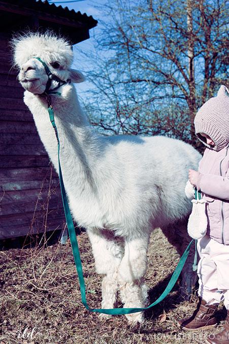 winterspaziergang-mit-kindern-und-alpaka