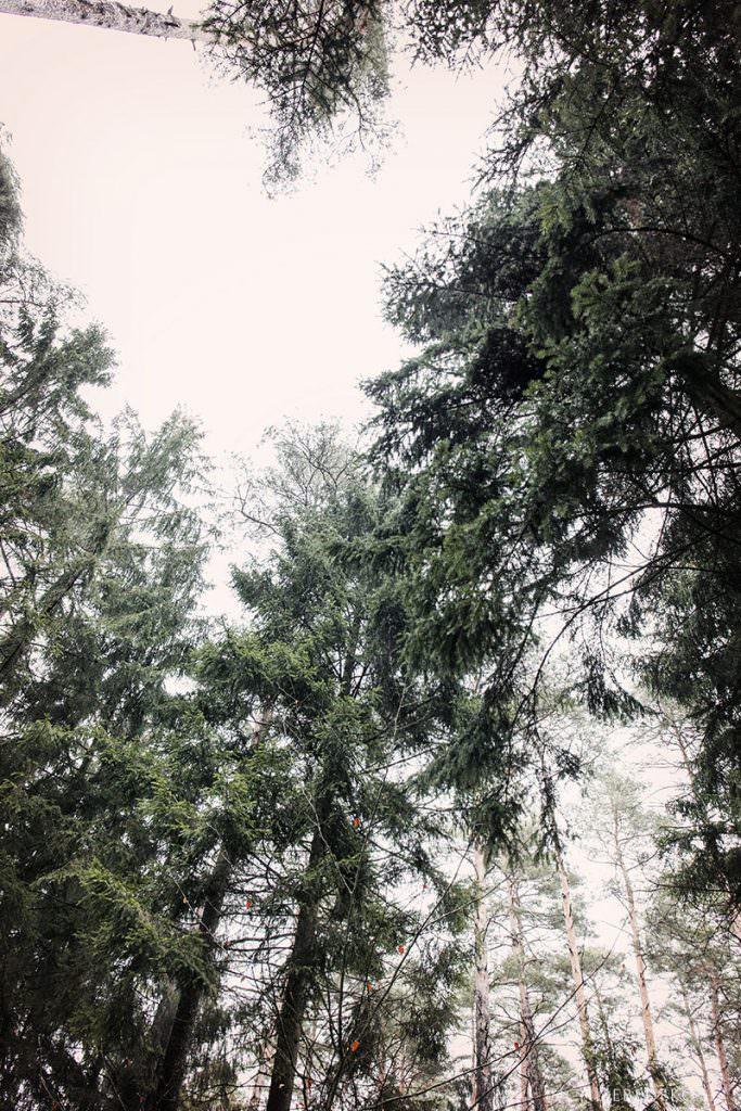 Tannenbäume im Winterwald